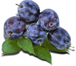 plum packshot.png